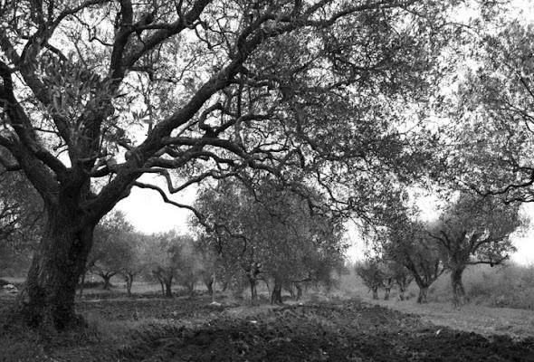 Tra gli ulivi di Barbara Heidebrunn