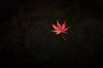 Photo: Autumn Vibrations  Been a busy week. Currently in the process of trying to get my Japanese driver's license, which will be a huge blessing for a lot of reasons. Kind of nice to work on a simple, calm image like this right now.  Blog post: http://lestaylorphoto.com/autumn-vibrations/  #japan #autumn #minimal #nikon #fall
