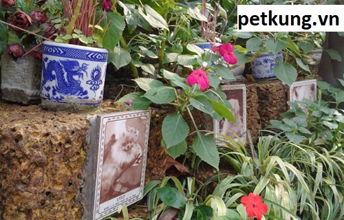 Chôn cất mèo tại các nghĩa trang thú cưng