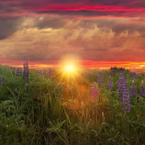 Lupin sunrise by Kathy Image - Landscapes Sunsets & Sunrises ( sunrise, mountains, skyline, clouds, landscape )