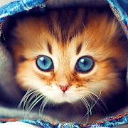 القطط لطيفه خلفية متحركة