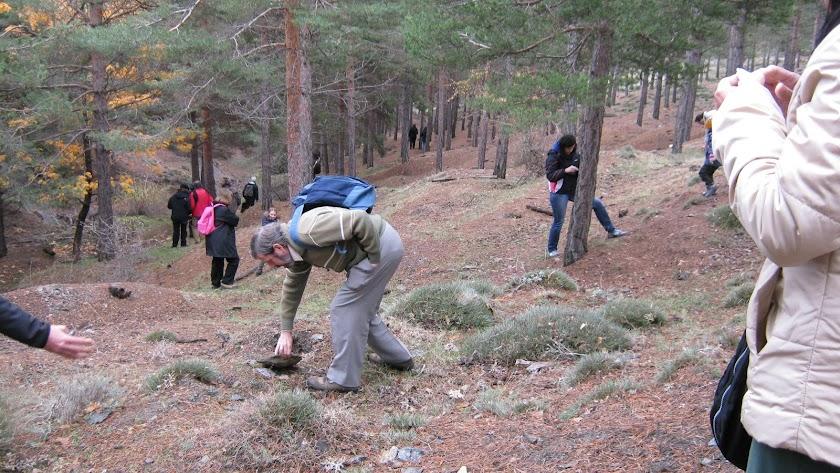 Aficionados a la recolección de setas durante una jornada micológica celebrada en la Sierra de los Filabres.