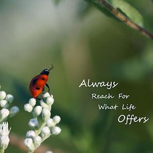 bug ladybug reaching life offers no text.jpg