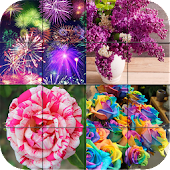 Puzzle - Colorful Photo