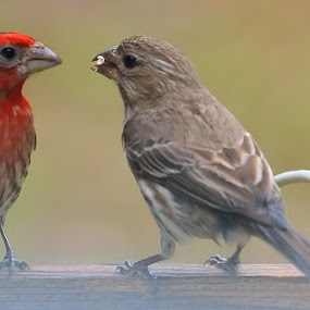 What's mine is yours by Ivy Luna - Animals Birds ( finch,  )