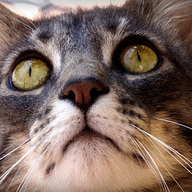 Eyes by Simona Savini - Animals - Cats Portraits (  )