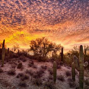 Tucson Sunrise by Charlie Alolkoy - Landscapes Deserts ( desert, arizona, tucson, sunrise, cactus )