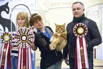 Photo: The Best Maine Coon - Bruno ow. Elena Grebennikova & N.Afonicheva