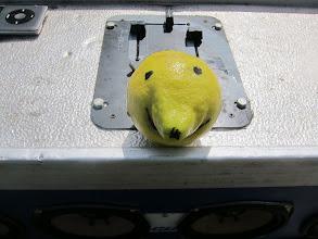 Photo: Thorkild - citronen der ikke ville være sur.