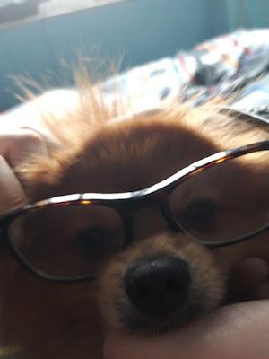 Un cane... intellettuale di Fabenz