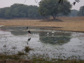 Photo: The disgraceful state of the famous World Heritage Site Bird Scanctuary at Bharatpur - I am hoping that the monsoon of 2008 improved the state of the park.
