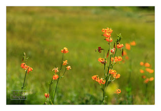 Photo: Eastern Sierras-20120716-426