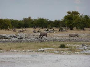 Photo: Etoschapark, Nashorn und Zebra