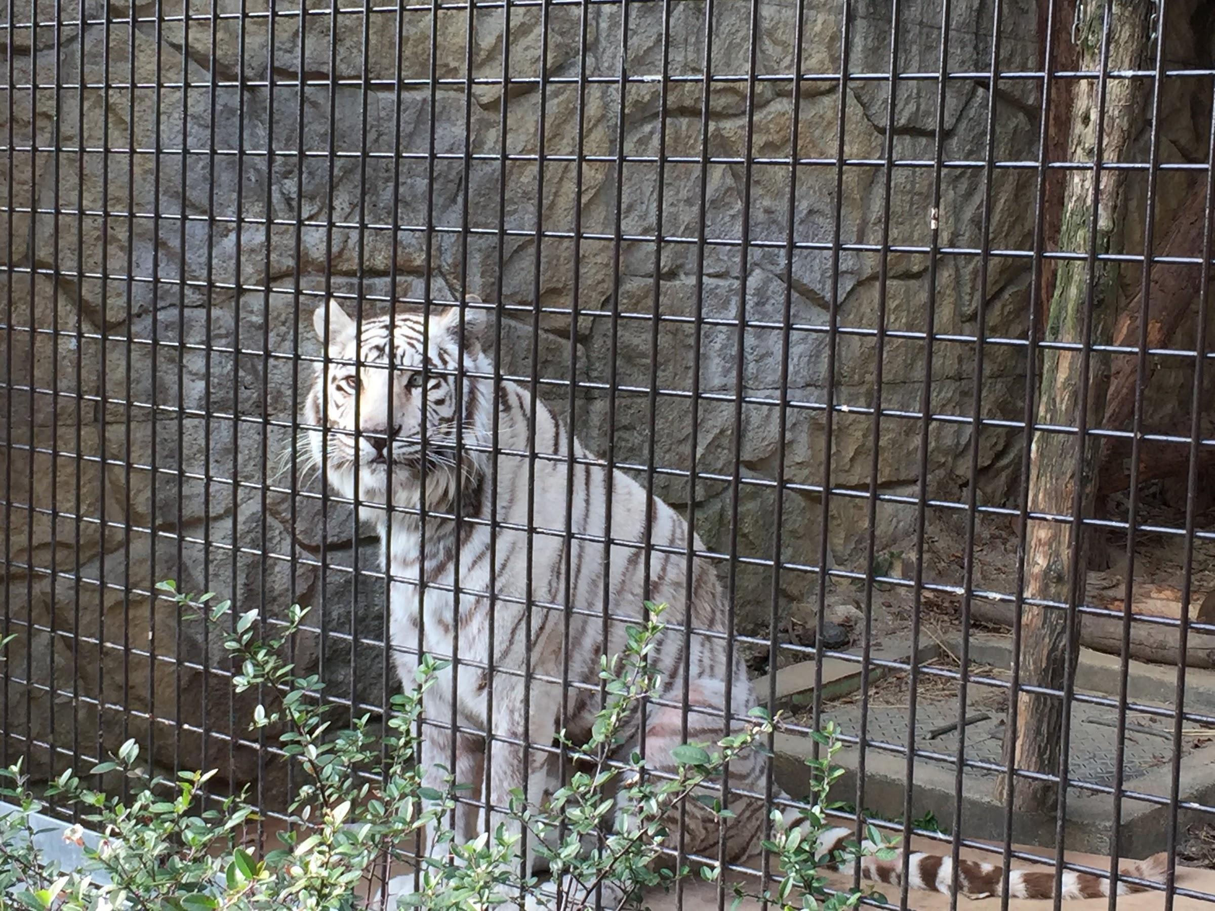 大牟田市動物園4