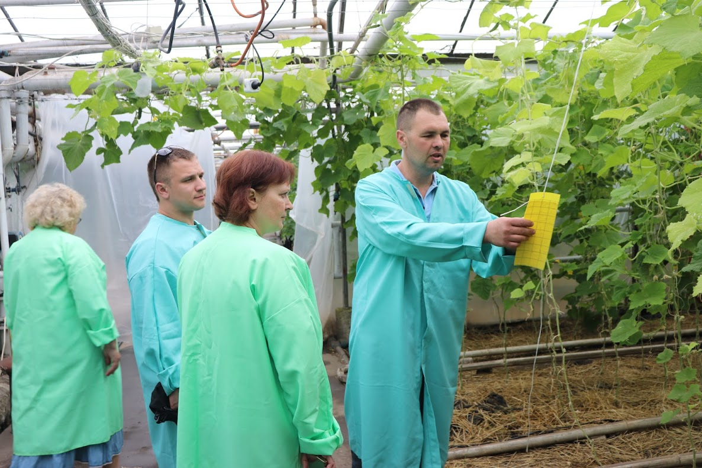 ферма терра органические овощи