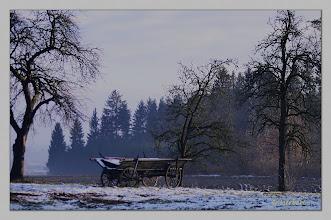 Photo: Am Waldrand 2012