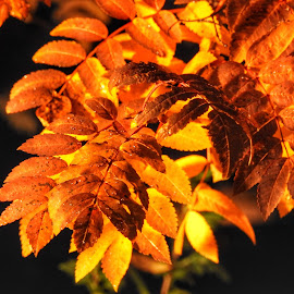Autumn Leaves by Patricia Phillips - Nature Up Close Leaves & Grasses ( leaves autumn golden )