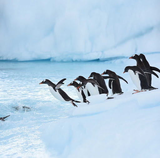 penguins-antarctica2.jpg - Penguins in Paradise Bay during a Ponant sailing to Antarctica.