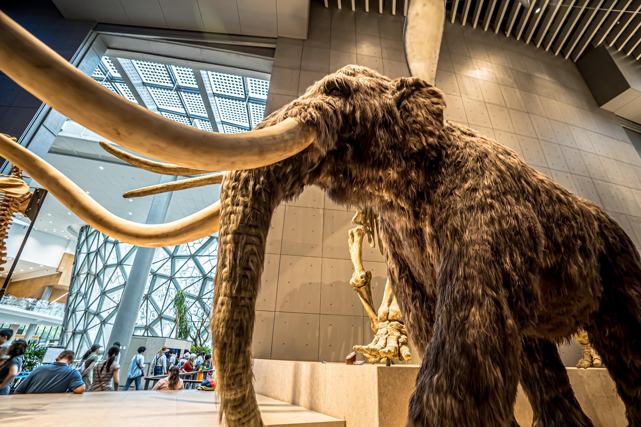 上海自然博物館5