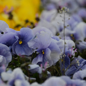 by Baka No Hito - Nature Up Close Flowers - 2011-2013