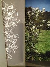 Photo: Chardon de l'herbier