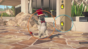 What a Circus; Got Fetch; The Olympic Games thumbnail