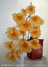 Photo: Dendrobium aggregatum