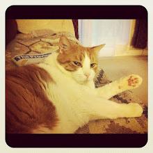 Photo: Well, Hello again! #cat #pet #animal #paw #catstagram #intercer #instagood #instadaily #instamood #jj #pets - via Instagram, http://instagr.am/p/MwEzqmpfn6/
