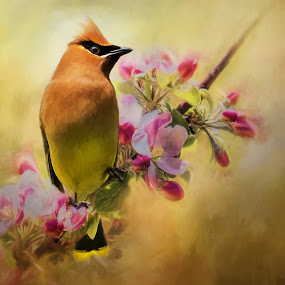 Cedar Waxwing on branch by Rich Reynolds - Digital Art Animals ( bird, maine, maine birds, digital art, cedar waxwing, bird photography, birding,  )