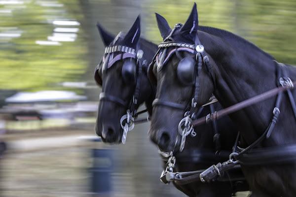 Cavalli di Antonio Piazza