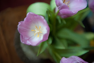 Photo: Mom's tulip