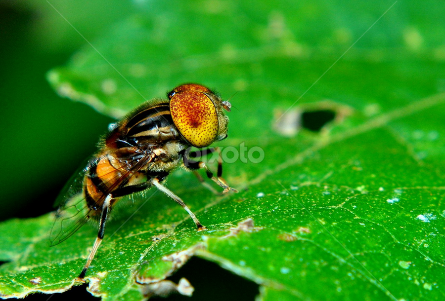 Big head... by Mpu Gimblond - Animals Insects & Spiders