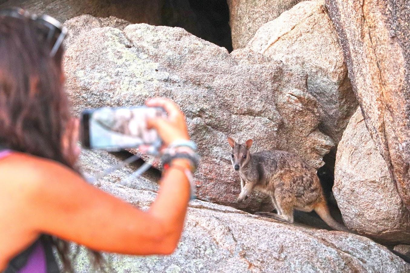 Visitar MAGNETIC ISLAND, um refúgio de cangurus e koalas