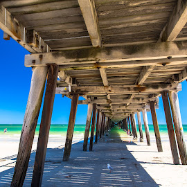 Good Old Wooden Jetty by Gary Pore - Buildings & Architecture Bridges & Suspended Structures ( seagull, wooden jetty, relax, beach )