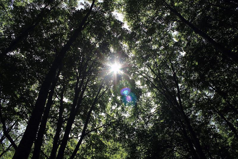 Armonia ed equilibrio della natura di Photolo