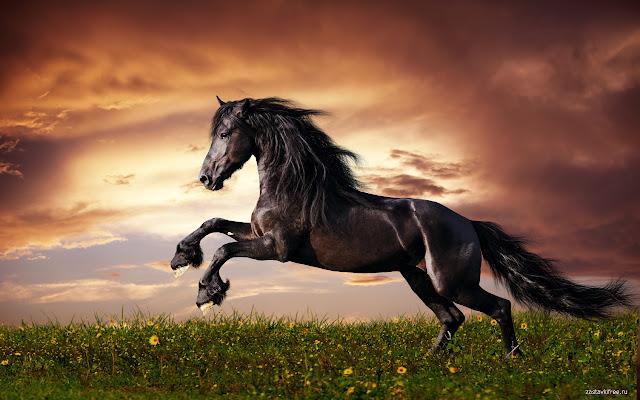 Horse 15 Interesting