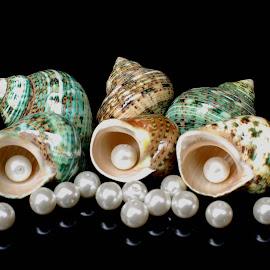 hermit crabs seashells and pearls by Adjie Tjokrosoedarmo - Artistic Objects Still Life ( pearls, sea, seashells, hermit, crab )