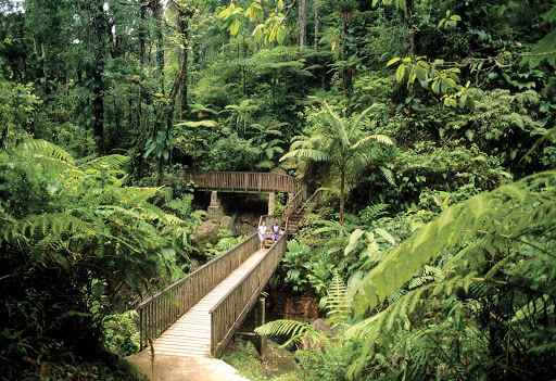 Guadeloupe-rainforest-walk.jpg - Choose a rainforest hike while visiting Basse Terre, Guadeloupe.