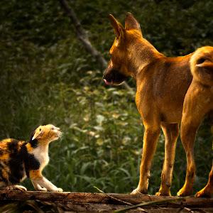 dog n cat, edited.jpg