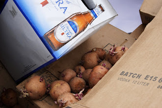 Photo: This morning I was telling my wife I'd read how potato growing in The Martian wasn't realistic since all potatoes are now treated to prevent sprouting. But, during my walk this afternoon I passed these in an open, stinky dumpster: