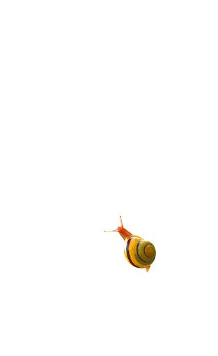 Snail  screenshots 2
