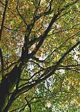 """Photo: 2. plads november 2018, foto: Jytte Lindekrans. Tema: """"Et træ""""."""