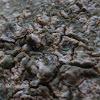 Graphid Lichen