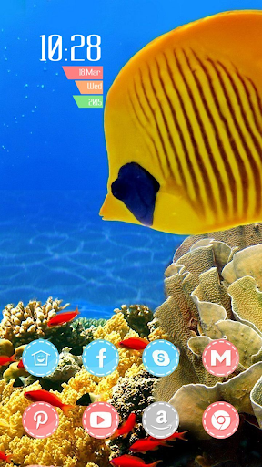The Yellow Fish