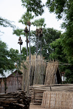 Photo: Year 2 Day 57 - Bamboo Collecting in Bagan