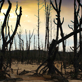 Bakau by Maji Shuki - Landscapes Forests