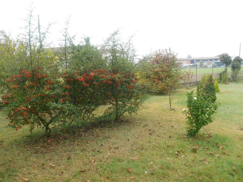 arrivo dell'autunno di pieroluigi