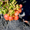 'Ōhelo berry/ʻōhelo ʻai