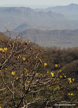 Photo: Flowering tree at El Mirador del Aguila