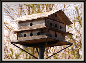 Photo: Day 344 Birdhouse on the Morris Canal  Little Falls, NJ